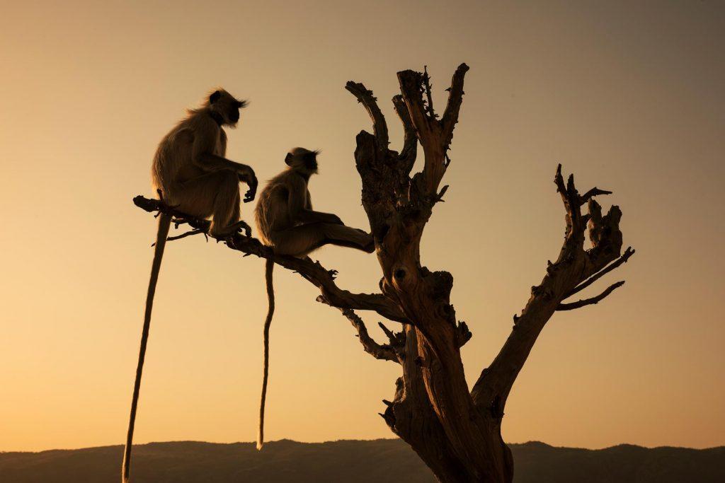 Que ver en Pushkar